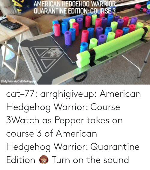 warrior: cat–77: arrghigiveup:   American Hedgehog Warrior: Course 3Watch as Pepper takes on course 3 of American Hedgehog Warrior: Quarantine Edition 🦔     Turn on the sound