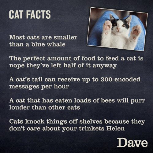 Cats, Facts, and Food: CAT FACTS  Most cats are smaller  than a blue whale  The perfect amount of food to feed a cat is  nope they've left half of it anyway  A cat's tail can receive up to 300 encoded  messages per hour  A cat that has eaten loads of bees will purr  louder than other cats  Cats knock things off shelves because they  don't care about your trinkets Helen  Dave