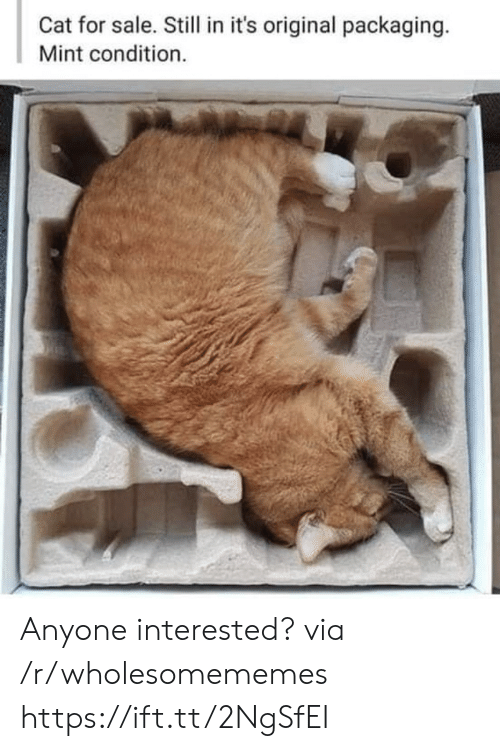 Cat, Mint, and Via: Cat for sale. Still in it's original packaging.  Mint condition. Anyone interested? via /r/wholesomememes https://ift.tt/2NgSfEI
