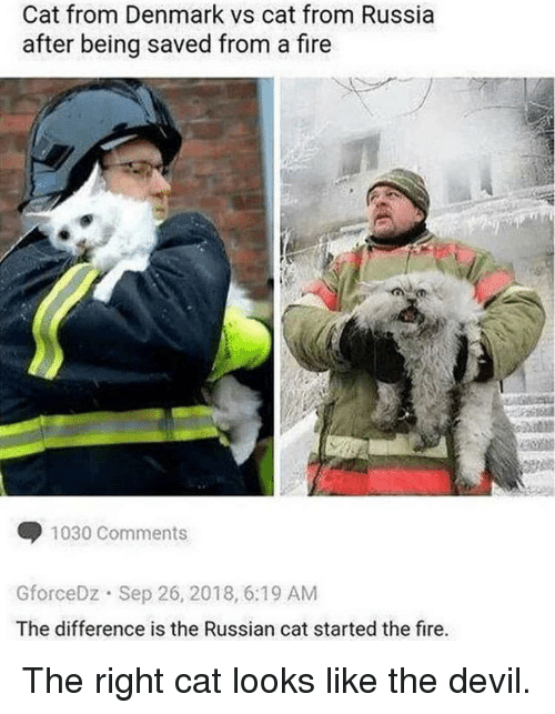 Fire, Devil, and Denmark: Cat from Denmark vs cat from Russia  after being saved from a fire  1030 Comments  GforceDz Sep 26, 2018, 6:19 AM  The difference is the Russian cat started the fire. The right cat looks like the devil.