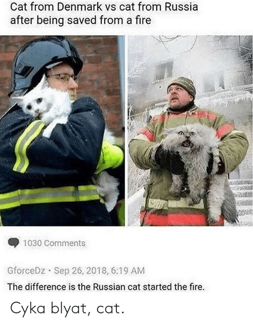 Fire, Denmark, and Russia: Cat from Denmark vs cat from Russia  after being saved from a fire  1030 Comments  Sep 26, 2018, 6:19 AM  GforceDz  The difference is the Russian cat started the fire. Cyka blyat, cat.