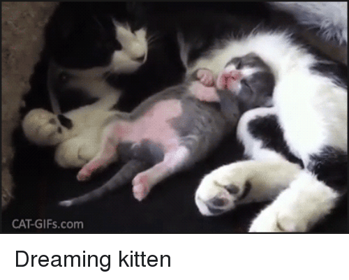 Gifs, Wild, and Dreams: CAT-GIFs.com Dreaming kitten