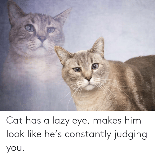 Lazy: Cat has a lazy eye, makes him look like he's constantly judging you.