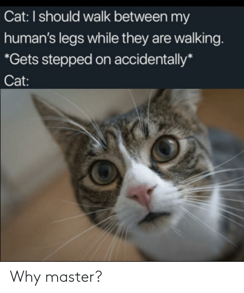 accidentally: Cat: I should walk between my  human's legs while they are walking.  *Gets stepped on accidentally*  Cat: Why master?