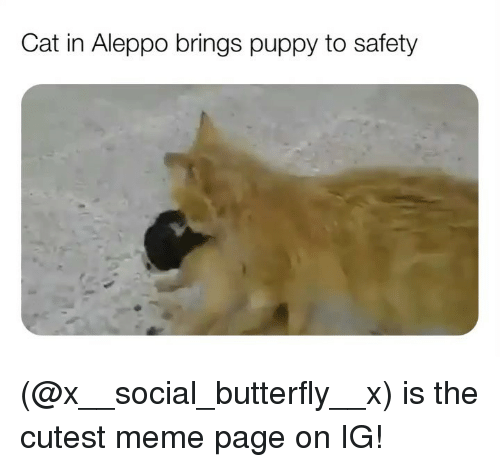 Meme, Memes, and Butterfly: Cat in Aleppo brings puppy to safety (@x__social_butterfly__x) is the cutest meme page on IG!