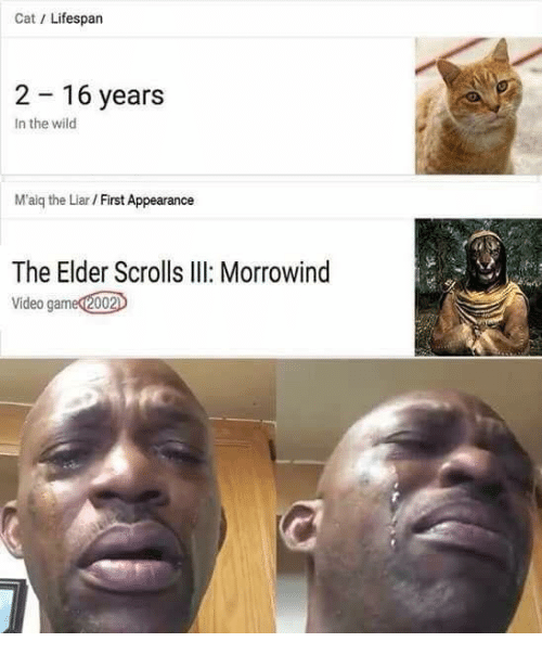 Video, Wild, and Elder Scrolls: Cat/ Lifespan  2 16 years  In the wild  M'aig the Liar / First Appearance  The Elder Scrolls II Morrowind  Video gamed2002
