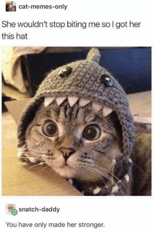 Memes, Got, and Her: cat-memes-only  She wouldn't stop biting me so I got her  this hat  snatch-daddy  You have only made her stronger.