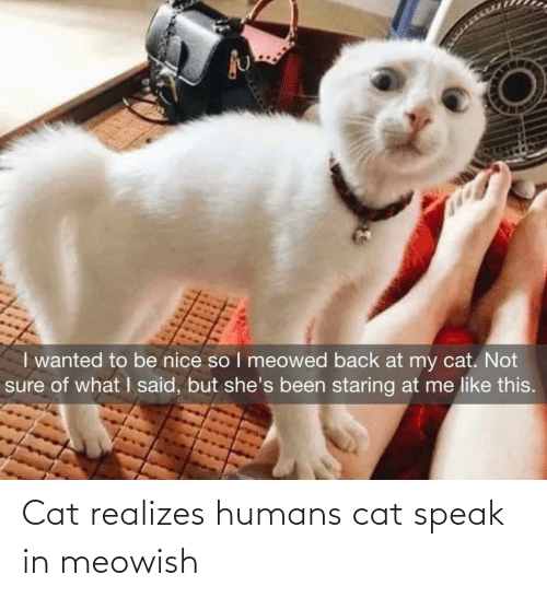 humans: Cat realizes humans cat speak in meowish