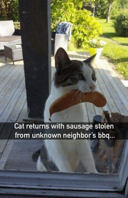 Memes, Neighbors, and 🤖: Cat returns with sausage stolen  from unknown neighbor's bbq...