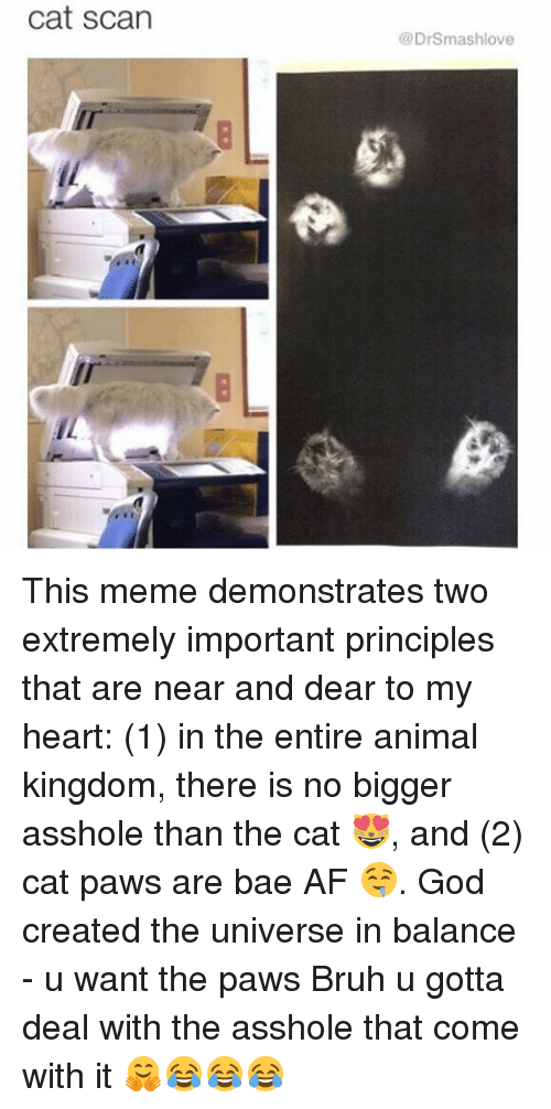 cat scan: cat scan  Dr Smash love This meme demonstrates two extremely important principles that are near and dear to my heart: (1) in the entire animal kingdom, there is no bigger asshole than the cat 😻, and (2) cat paws are bae AF 🤤. God created the universe in balance - u want the paws Bruh u gotta deal with the asshole that come with it 🤗😂😂😂