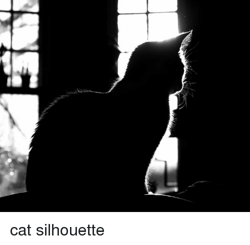 Silhouette and Cat: cat silhouette