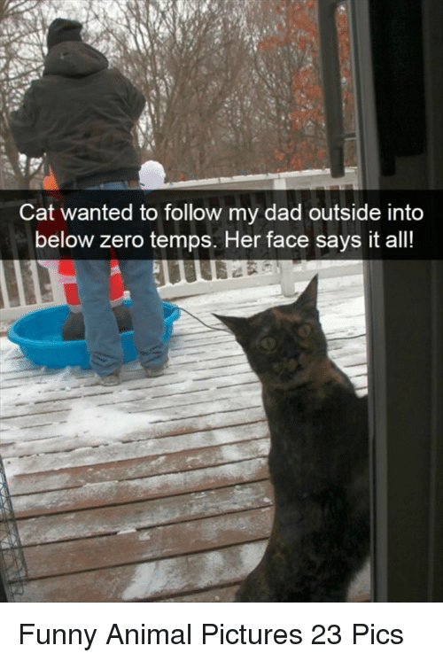 Dad, Funny, and Zero: Cat wanted to follow my dad outside into  below zero temps. Her face says it all! Funny Animal Pictures 23 Pics
