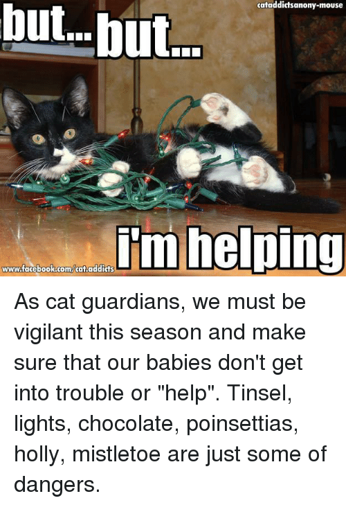 "Cats, Memes, and Chocolate: cataddictsanony-mouse  but but.  im helping  www.facebook.com/cataddicts As cat guardians, we must be vigilant this season and make sure that our babies don't get into trouble or ""help"". Tinsel, lights, chocolate, poinsettias, holly, mistletoe are just some of dangers."