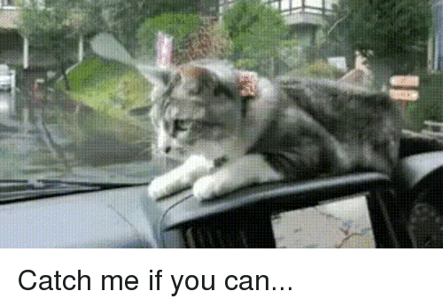 Catch Me if You Can, Awww, and Can: Catch me if you can...