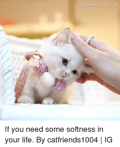 Dank, Life, and 🤖: catfriends1004 | IG If you need some softness in your life.  By catfriends1004 | IG
