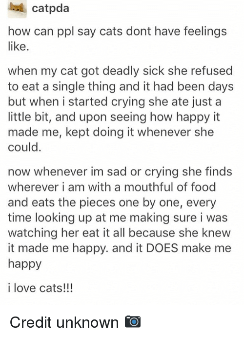 Cats, Crying, and Food: catpda  how can ppl say cats dont have feelings  like  when my cat got deadly sick she refused  to eat a single thing and it had been days  but when i started crying she ate just a  little bit, and upon seeing how happy it  made me, kept doing it whenever she  could.  now whenever im sad or crying she finds  wherever i am with a mouthful of food  and eats the pieces one by one, every  time looking up at me making sure i was  watching her eat it all because she knew  it made me happy. and it DOES make me  happy  i love cats!!!  Credit unknown O