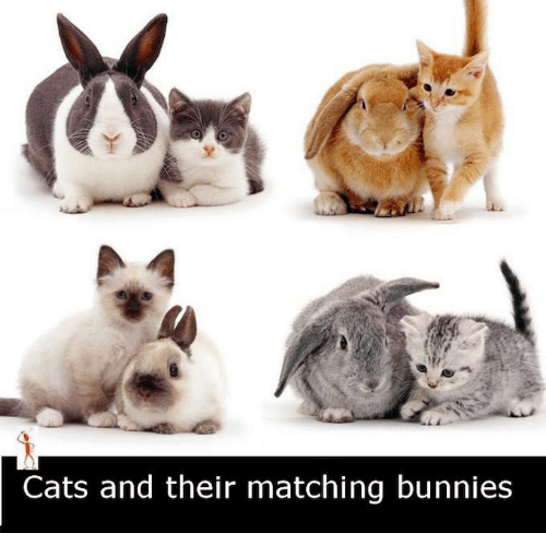 Bunni: Cats and their matching bunnies