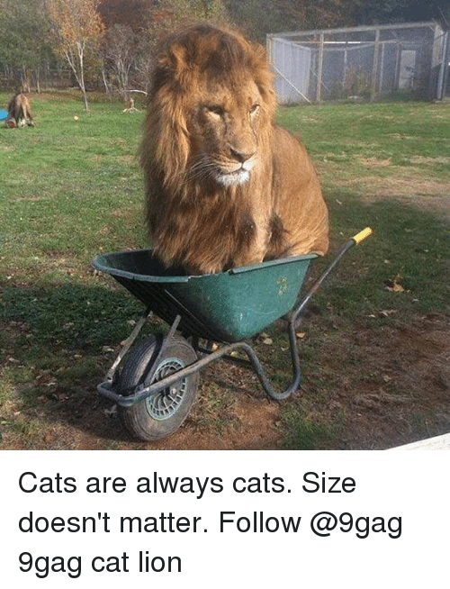 9gag, Cats, and Memes: Cats are always cats. Size doesn't matter. Follow @9gag 9gag cat lion