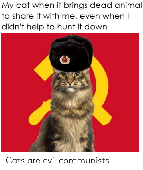 Evil: Cats are evil communists
