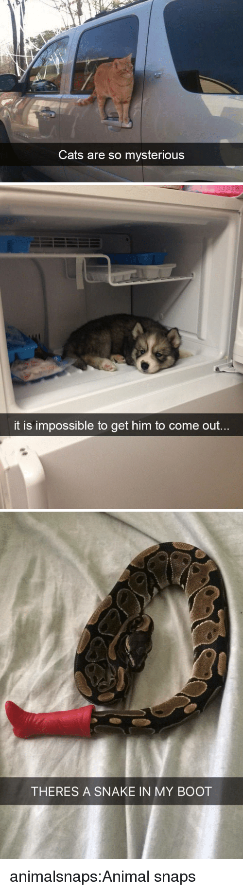 Cats, Target, and Tumblr: Cats are so mysterious   it is impossible to get him to come  out.   THERES A SNAKE IN MY BOOT animalsnaps:Animal snaps