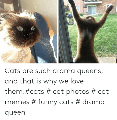 Cats, Funny, and Love: Cats are such drama queens, and that is why we love them.#cats # cat photos # cat memes # funny cats # drama queen