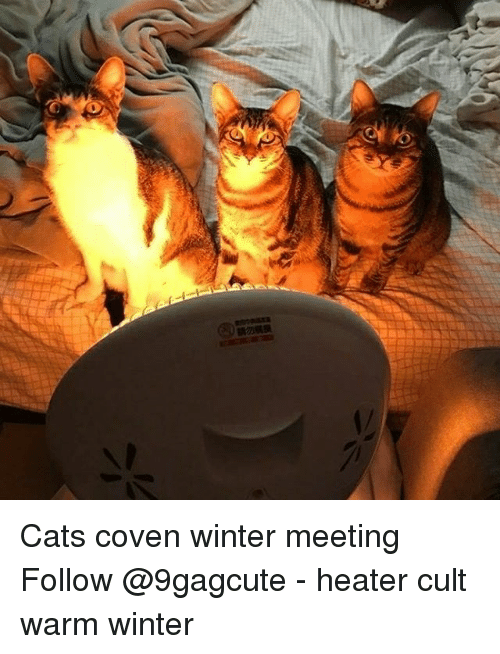 Cats, Memes, and Winter: Cats coven winter meeting Follow @9gagcute - heater cult warm winter