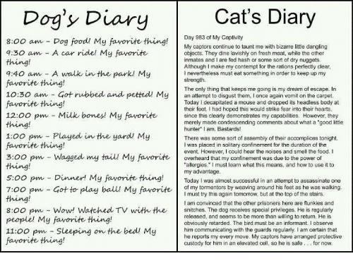 "Contempting: Cat's Diary  Dog's Diary  Day 983 of My Captivity  8:00 am Dog food My favorite thing  My captors continue to taunt me with bizarre little dangling  7:30 am A car ride! My favorite  objects. They dine lavishly on fresh meat, while the other  inmates and I are fed hash or some sort of dry nuggets  Although I make my contempt for the rations perfectly clear  7:40 am A walk in the park My  l nevertheless must eat something in order to keep up my  strength.  favorite thing!  The only thing that keeps me going is my dream of escape. In  10:30 am Got rubbed and petted My  an to them, I once again vomit on the carpet  Today decapitated a mouse and dropped its headless body at  favorite thing!  their feet. Ihad hoped this would strike fear into their hearts  12:00 pm Milk bones My favorite  since this clearly demonstrates my capabilities. However, they  merely made condescending comments about what a ""good little  hunter"" I am, Bastards!  1:00 pm Played in the yard My  There was some sort of assembly of their accomplices tonight.  favorite thing!  I was placed in solitary confinement for the duration of the  event. However, could hear the noises and smell the food. I  3:00 pm Wagged my tail My favorite  overheard that my confinement was due to the power of  allergies."" must learn what this means, and how to use it to  s oo pm my advantage  successful in an attempt to assassinate one  Dinner! My favorite thing.  Today was almost of my tormentors by weaving around his feet as he was walking  7:00 pm Got to play ball My favorite  must try this again tomorrow, but at the top of the stairs  am convinced that the other prisoners here are flunkies and  8:00 pm Wow! Watched TV with the  snitches. The dog receives special privileges. He is regularly  released, and seems to be more than willing to return. He is  people' My favorite thing!  obviously retarded. The bird must be an informant. I observe  11:00 pm Sleeping on the bed My  him communicating with the guards regularly, I am certain that  captors have arranged protective  cell  so he is safe for now.  custody for him in an elevated favorite thing!"