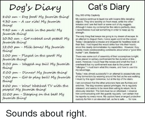 "Contempting: Cat's Diary  Dog's Diary  Day 983 of My Captivity  8:00 am Dog food! My favorite thing  My captors continue to taunt me with bizarre little dangling  a:30 am A car ride! My favorite  objects. They dine lavishly on fresh meat, while the other  inmates and I are fed hash or some sort of dry nuggets  Although make my contempt for the rations perfectly clear  9:40 am A walk in the parkl My  nevertheless must eat something in order to keep up my  strength.  favorite thing!  The only thing that keeps me going is my dream of escape. In  10:30 am Got rubbed and petted My  an attempt to disgust them, l once again vomit on the carpet  favorite thing!  Today decapitated a mouse and dropped its headless body at  their feet. Ihad hoped this would strike fear into their hearts  12:00 pm Milk bones My favorite  since this clearly demonstrates my capabilities. However, they  merely made condescending comments about what a ""good little  hunter"" I am, Bastards!  1:00 pm Played in the yard My  There was some sort of assembly of their accomplices tonight.  favorite thing!  I was placed in solitary confinement for the duration of the  event. However, I could hear the noises and smell the food. I  3:00 pm Wagged my taiu My favorite overheard that my confinement was due to the power of  thing!  allergies."" must learn what this means, and how to use it to  my advantage  5:00 pm Dinner! My favorite thing  Today was almost successful in an attempt to assassinate one  of my tormentors by weaving around his feet as he was walking  7:00 pm Got to play ball My favorite  I must try this again tomorrow, but at the top of the stairs  am convinced that the other prisoners here are flunkies and  8:00 pm Wow! Watched TV with the snitches. The dog receives special privileges. He is regularly  released, and seems to be more than willing to return. He is  people' My favorite thing!  obviously retarded. The bird must be an informant. I observe  11:00 pm Sleeping  on the bed! My  him communicating with the guards regularly, I am certain that  he reports my every move. My captors have arranged protective  favorite thing!  custody for him in an elevated cell, so he is safe for now Sounds about right."