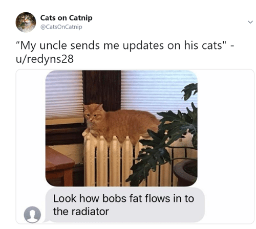"""catnip: Cats on Catnip  @CatsOnCatnip  """"My uncle sends me updates on his cats""""  u/redyns28  Look how bobs fat flows in to  the radiator"""