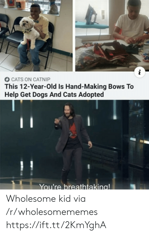 catnip: CATS ON CATNIP  This 12-Year-Old Is Hand-Making Bows To  Help Get Dogs And Cats Adopted  You're breathtaking! Wholesome kid via /r/wholesomememes https://ift.tt/2KmYghA