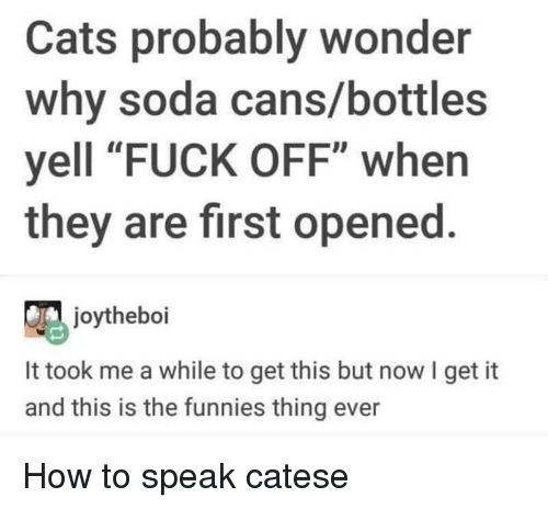 "Cats, Soda, and Fuck: Cats probably wonder  why soda cans/bottles  yell ""FUCK OFF"" when  they are first opened.  joytheboi  It took me a while to get this but now I get it  and this is the funnies thing ever How to speak catese"