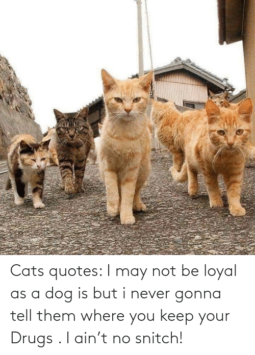 tell them: Cats quotes: I may not be loyal as a dog is but i never gonna tell them where you keep your Drugs . I ain't no snitch!
