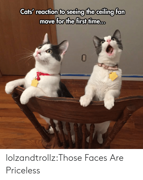 Cats, Tumblr, and Blog: Cats' reaction to seeing the ceiling fan  move for the first time.. lolzandtrollz:Those Faces Are Priceless