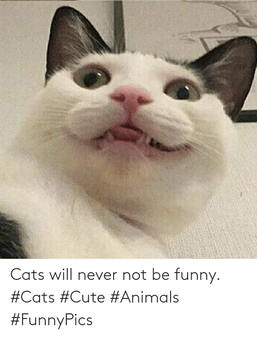 Funny: Cats will never not be funny. #Cats #Cute #Animals #FunnyPics