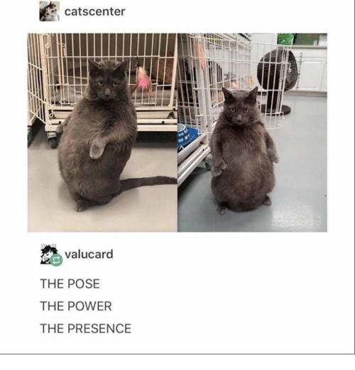 Power, Humans of Tumblr, and Presence: catscenter  valucard  THE POSE  THE POWER  THE PRESENCE