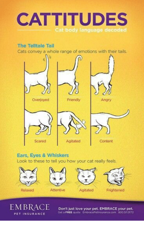 Cats, Love, and Free: CATTITUDES  Cat body language decoded  The Telltale Tail  Cats convey a whole range of emotions with their tais  Overjoyec  Friendly  Angry  Scared  Agitated  Content  Ears, Eyes & Whiskers  Look to these to tell you how your cat really feels  Relaxed  Attentive  Agitated  Frightenesd  Don't just love your pet. EMBRACE your pet.  Get a FREE quote EmbracePetinsurance.com 800.511 9172  PET INSURANCE
