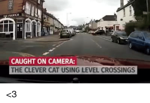 Memes, Camera, and Cross: CAUGHT ON CAMERA:  THE CLEVER CAT USING LEVEL CROSSINGS <3