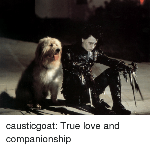 Love, True, and Tumblr: causticgoat: True love and companionship
