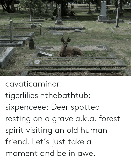 Deer: cavaticaminor: tigerliliesinthebathtub:  sixpenceee: Deer spotted resting on a grave a.k.a. forest spirit visiting an old human friend.   Let's just take a moment and be in awe.