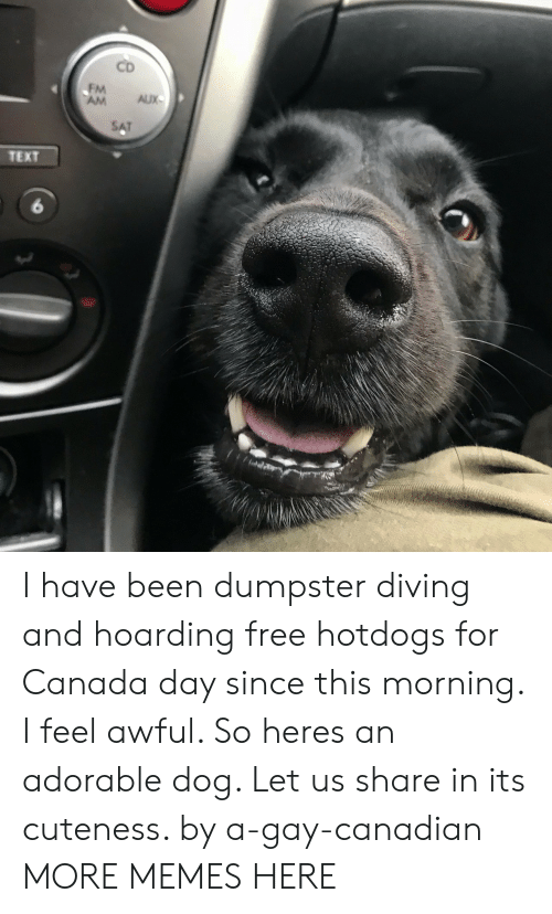 hoarding: CD  FM  AM AUX  TEXT  6 I have been dumpster diving and hoarding free hotdogs for Canada day since this morning. I feel awful. So heres an adorable dog. Let us share in its cuteness. by a-gay-canadian MORE MEMES HERE