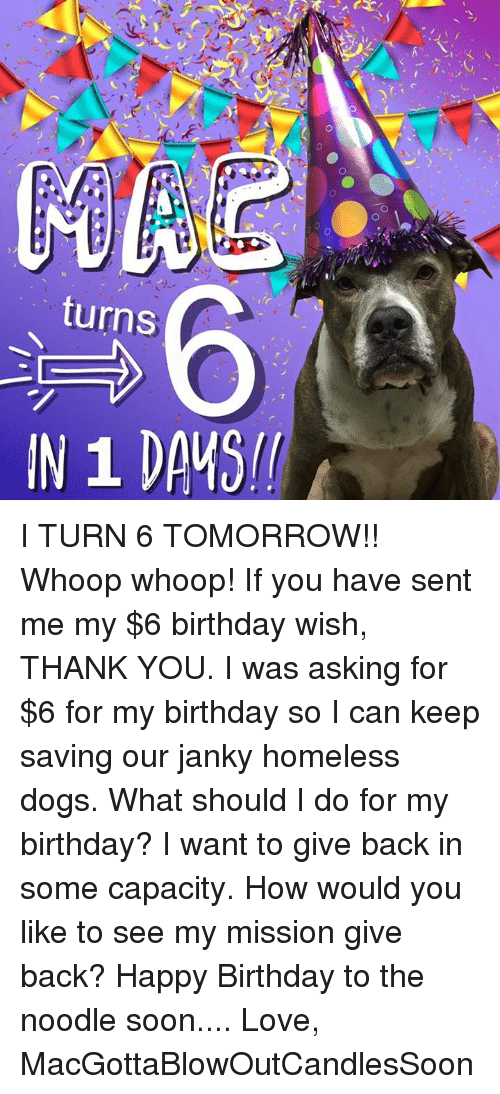Homeless, Memes, and Happy Birthday: CE  O  turns  /Pーーーーーーーー I TURN 6 TOMORROW!! Whoop whoop! If you have sent me my $6 birthday wish, THANK YOU. I was asking for $6 for my birthday so I can keep saving our janky homeless dogs. What should I do for my birthday? I want to give back in some capacity. How would you like to see my mission give back?   Happy Birthday to the noodle soon....   Love, MacGottaBlowOutCandlesSoon