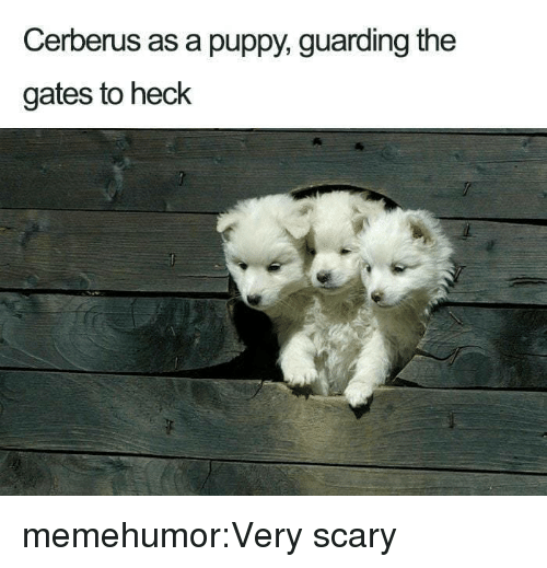 Target, Tumblr, and Blog: Cerberus as a puppy, guarding the  gates to heck memehumor:Very scary