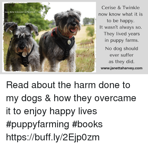 Books, Dogs, and Facebook: Cerise & Twinkle  now know what it is  to be happy  It wasn't always so  They lived years  in puppy farms  No dog should  ever suffer  as they did  www.janettaharvey.com  Susie-Belle Schnauzer on Facebook Read about the harm done to my dogs & how they overcame it to enjoy happy lives #puppyfarming #books https://buff.ly/2Ejp0zm