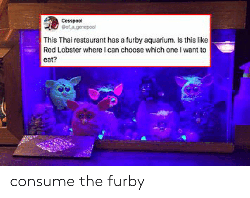Consume: Cesspool  otagenepool  This Thai restaurant has a furby aquarium. Is this like  Red Lobster where I can choose which one I want to  eat? consume the furby