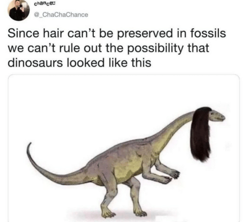 Dinosaurs, Hair, and Chance: chance  @_ChaChaChance  Since hair can't be preserved in fossils  we can't rule out the possibility that  dinosaurs looked like this