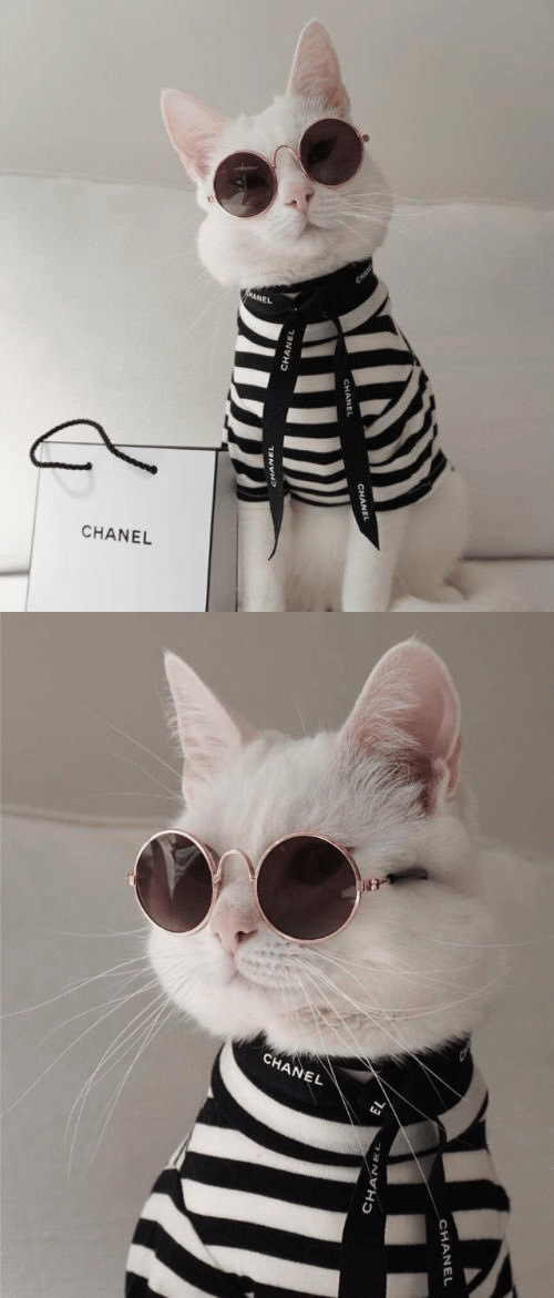 Chanel and Chanell: CHANEL   CHANEL