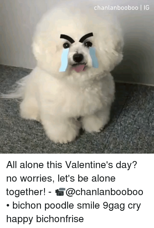 9gag, Being Alone, and Memes: chanlanbooboo   IG All alone this Valentine's day? no worries, let's be alone together! - 📹@chanlanbooboo • bichon poodle smile 9gag cry happy bichonfrise