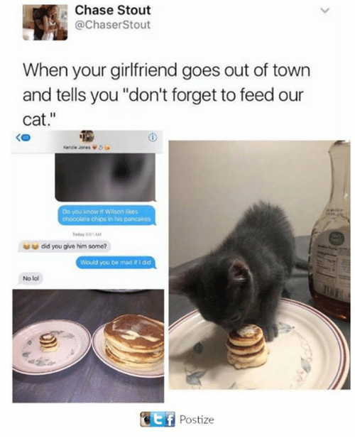 "Lol, Memes, and Chase: Chase Stout  @ChaserStout  When your girlfriend goes out of town  and tells you ""don't forget to feed our  cat.""  Do you know it Wilson ikes  chocolate chips in his pancakes  did you give him some?  Would you be mad #1 dd  No lol  Postize"