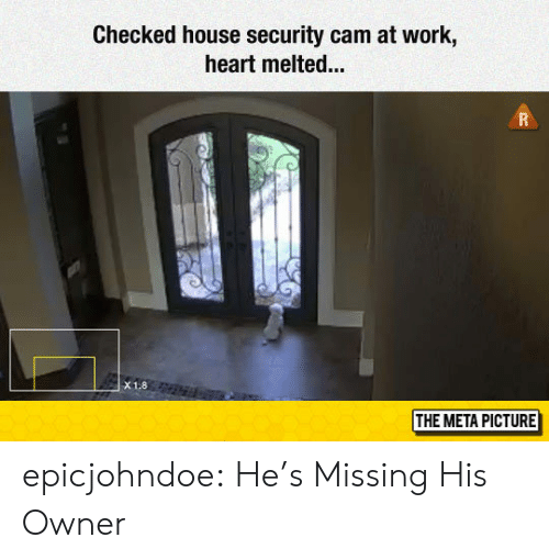Tumblr, Work, and Blog: Checked house security cam at work,  heart melted...  X1.8  THE META PICTURE epicjohndoe:  He's Missing His Owner