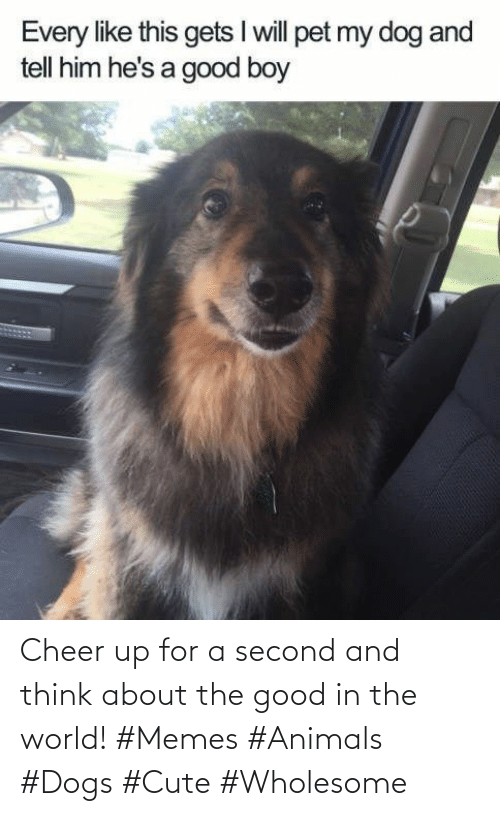 About The: Cheer up for a second and think about the good in the world! #Memes #Animals #Dogs #Cute #Wholesome